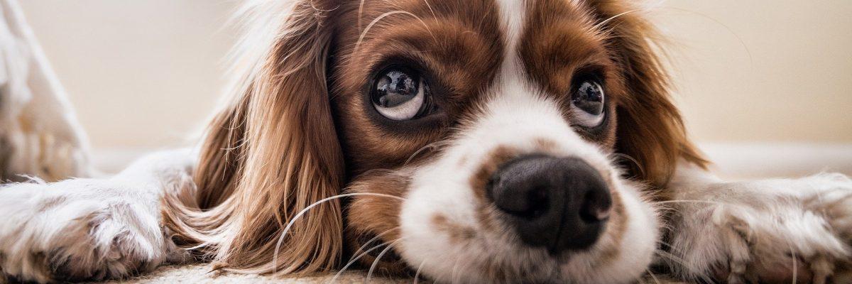 Assicurare il cane: i 10 incidenti domestici più frequenti