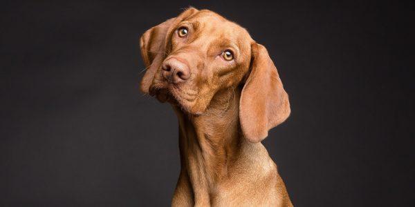 Assicurazione Cane: i sette aspetti da non trascurare