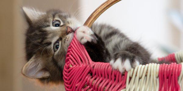 Assicurazione Gatto: Il Modo Migliore Per Ricambiare Il Suo Amore