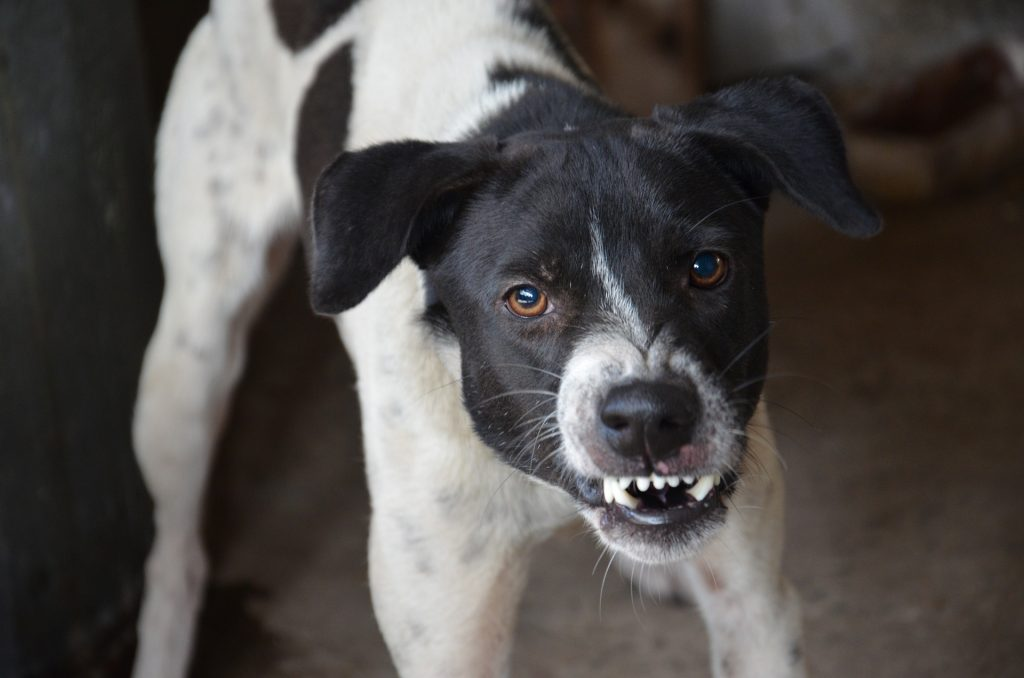 calcolo risarcimento danno morso cane
