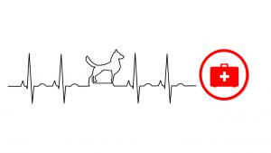 icona di un cane e della sua salute medica