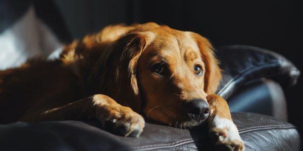 Assicurazione veterinaria: quanto costa e cosa copre