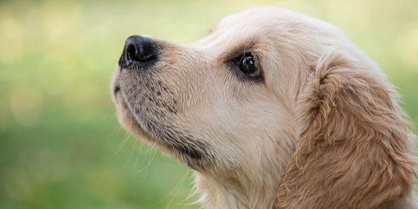 Migliore assicurazione cani: scopri qual è e chiedi subito un preventivo!